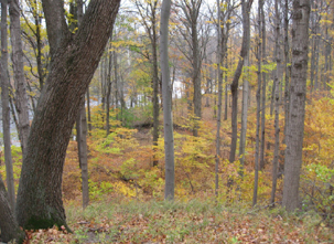 Woods overlooking the Grand River at Lincoln Brick (Photo and description by John Baumgartner)